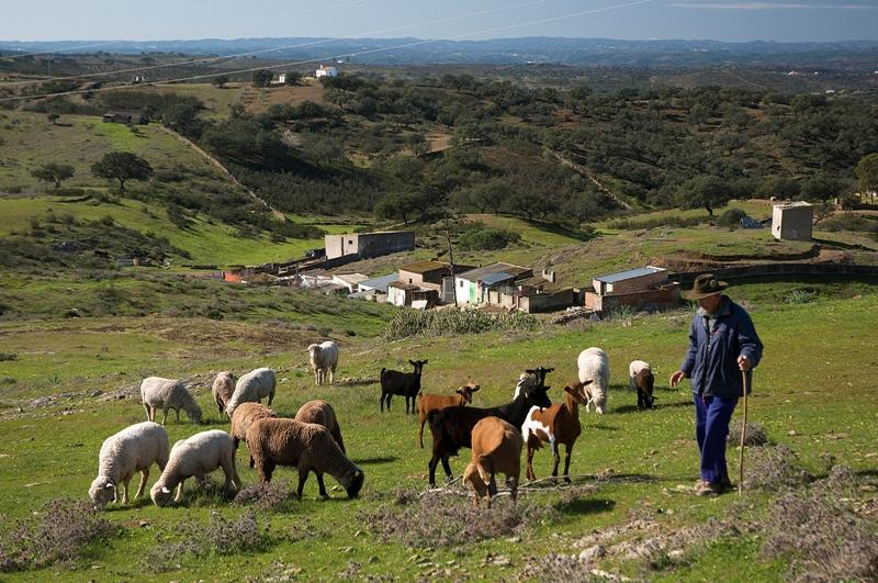 Rebaño y pastor. San Silvestre de Guzmán