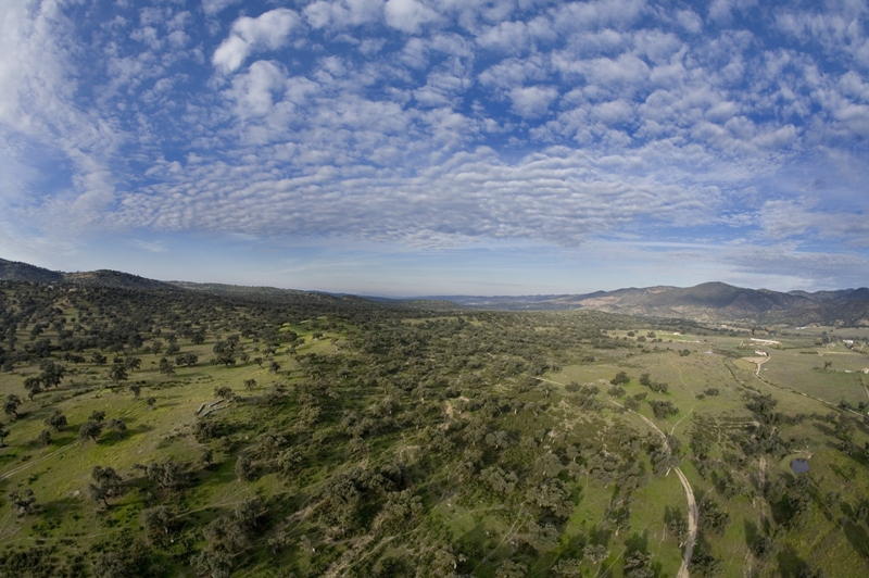 Dehesa de la Sierra de Aracena y Picos de Aroche. Autor: Javier Hernández Gallardo.