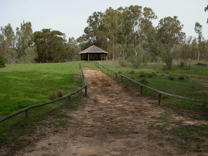 Camino de entrada al Arboreto de El Villar, en Bonares.