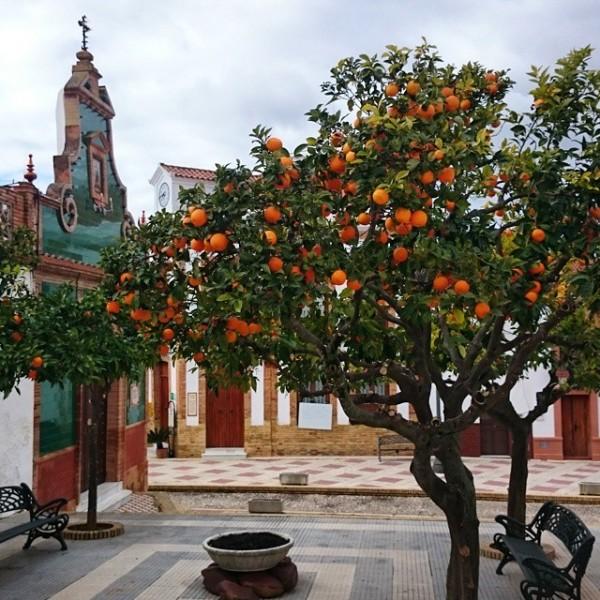 Plaza del Centro de Berrocal